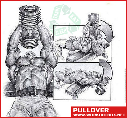 Pullover - Chest And Abs Workout Healthy Fitness Training Plan