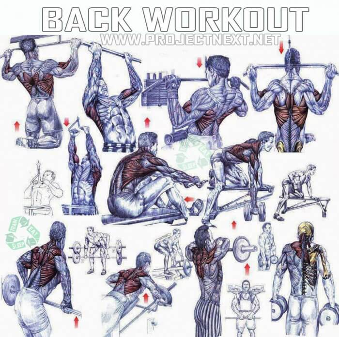 Back Workout Plan Healthy Fitness Training Routin