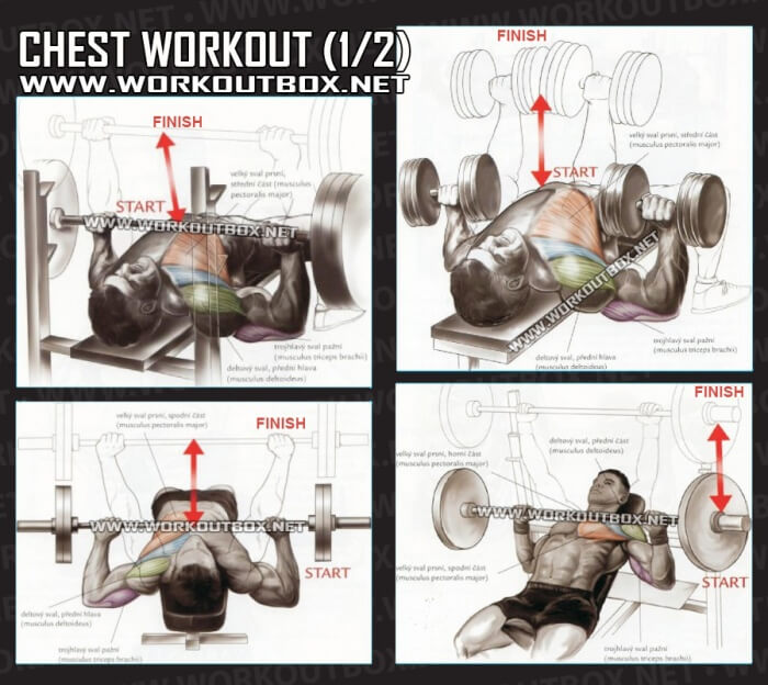 Workouts for arms and chest without weights