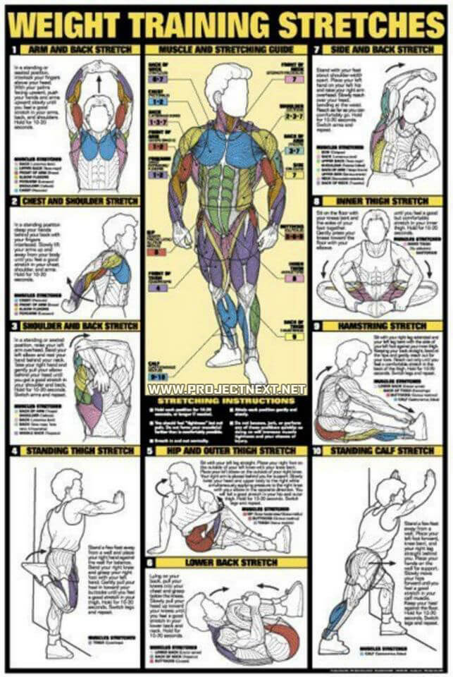 Weight Training Stretches Chart - Healthy Fitness Workout