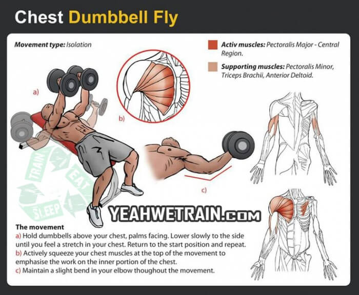 Chest Workout Dumbbell Fly