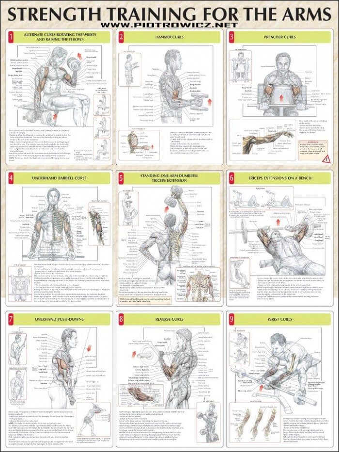 Strength Training For The Arms Healthy Biceps Triceps Workout