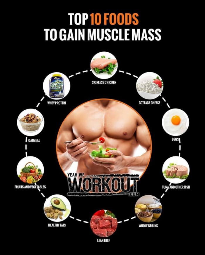 Exercises Muscle Builder