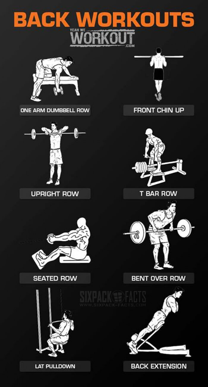 Back workout training healthy fitness routine lower core