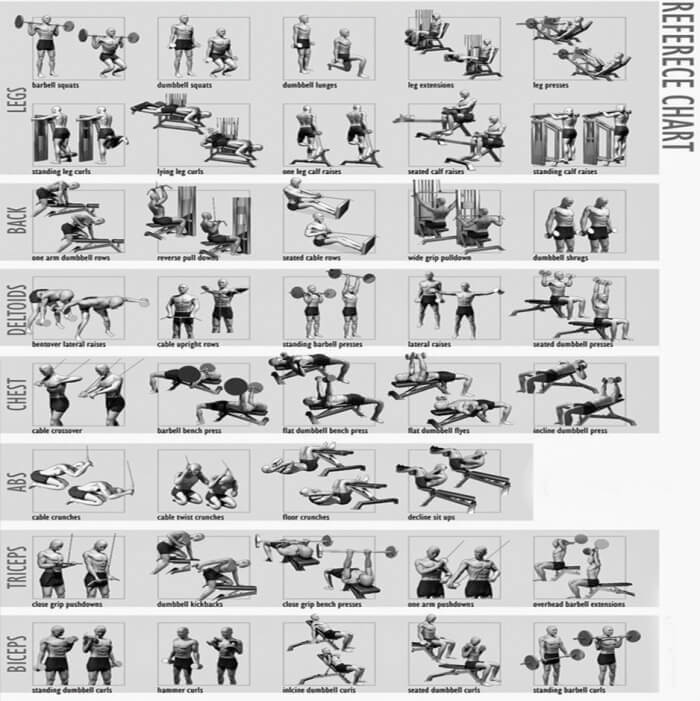 Full Body Workout Chart - Fitness Training Health Chest