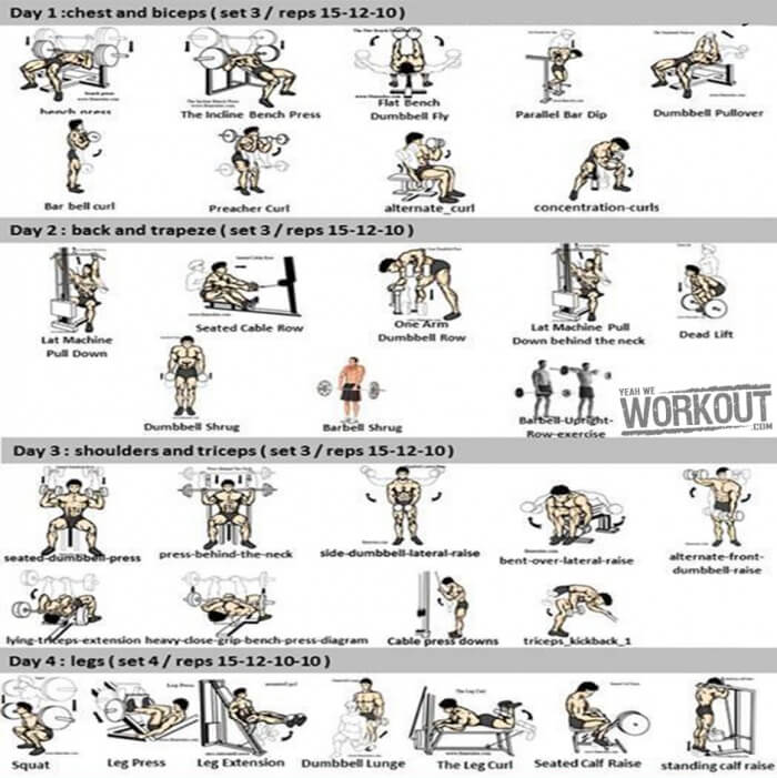 exercise machine for abs and back