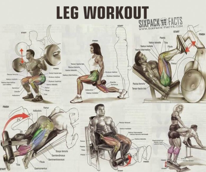 The Best Leg Workout Plan Healthy Fitness Training Routine Abs