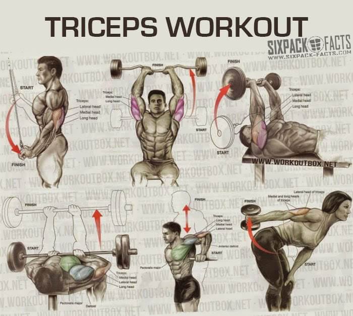 THE BEST TRICEPS WORKOUT PLAN