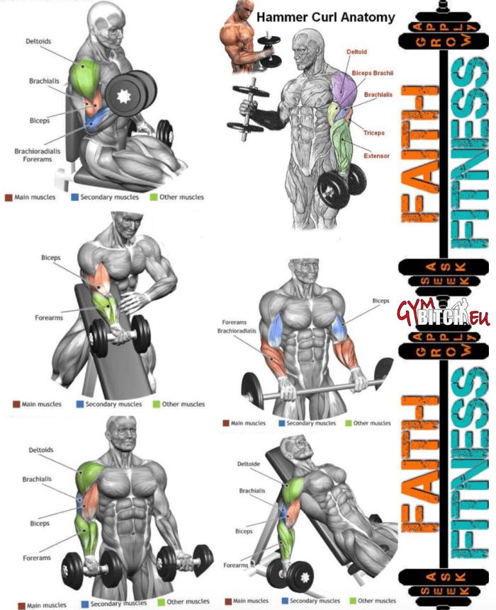 Bicep anatomy bodybuilding 7035849 - follow4more.info