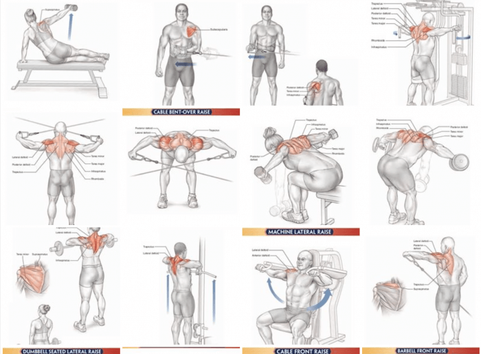Back, Lat, Shoulder Training Exercises ! Healthy Fitness Workout