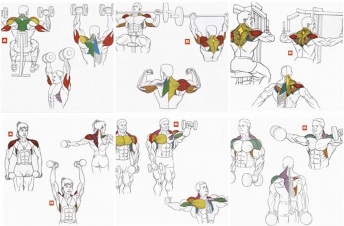 Shoulder Neck Training Exercises ! Healthy Fitness Workouts Plan