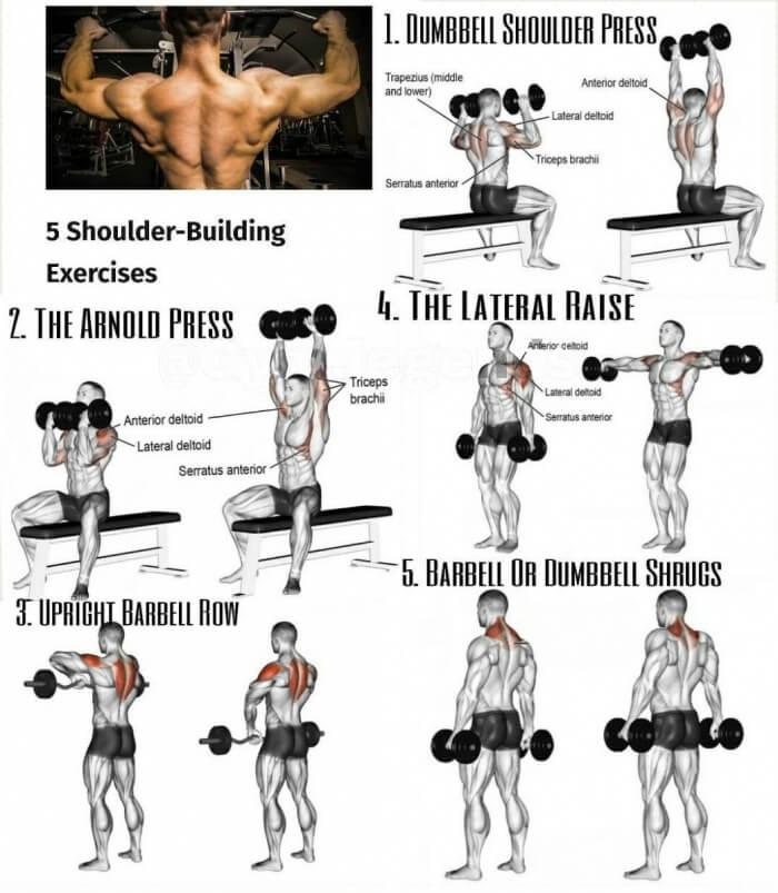 shoulder workout for mass pdf