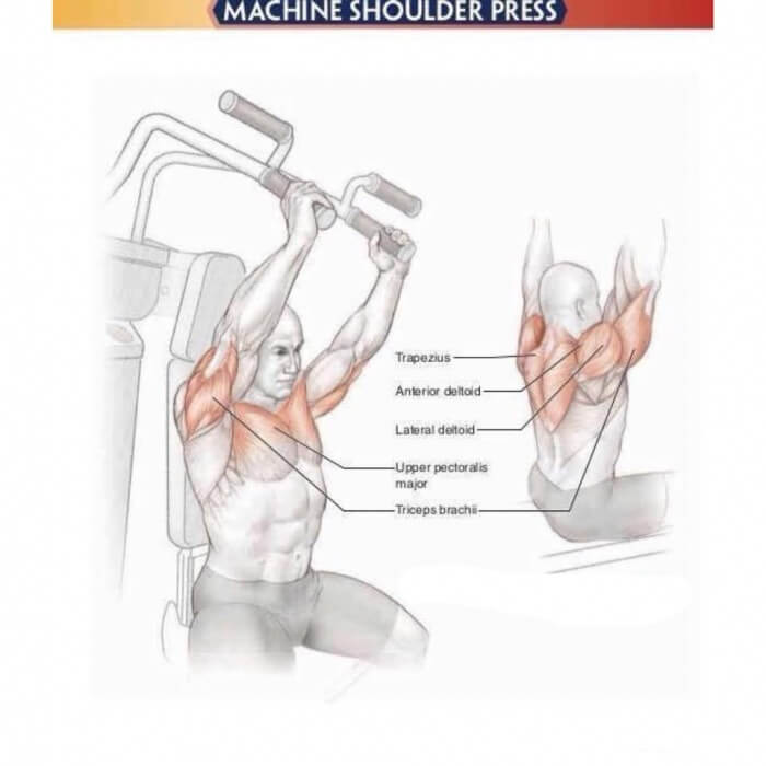 Amazing Shoulder Exercises 7: Machine Shoulder Press - Yeah We ...