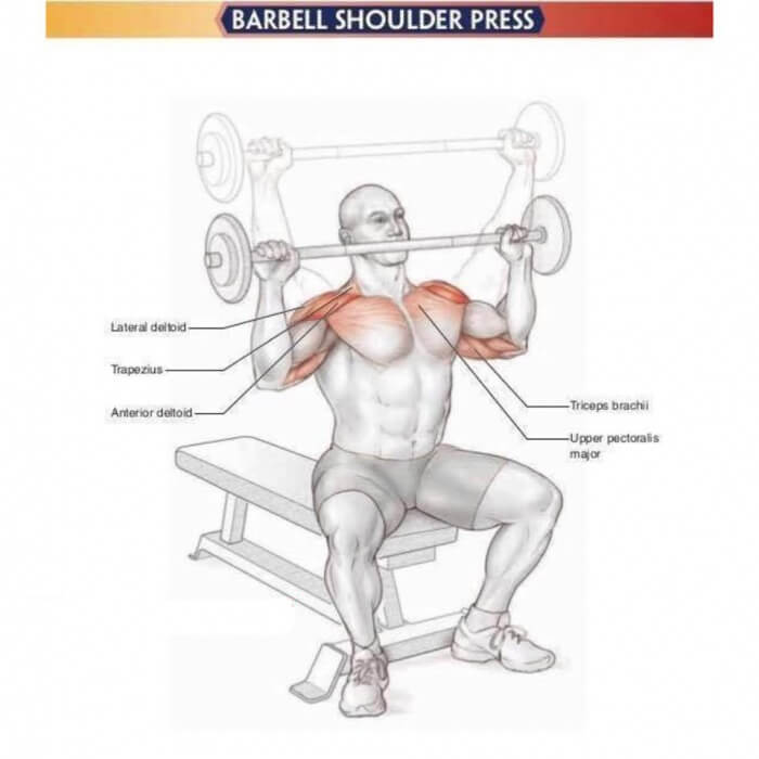 Amazing Shoulder Exercises 8: Barbell Shoulder Press - Yeah We ...