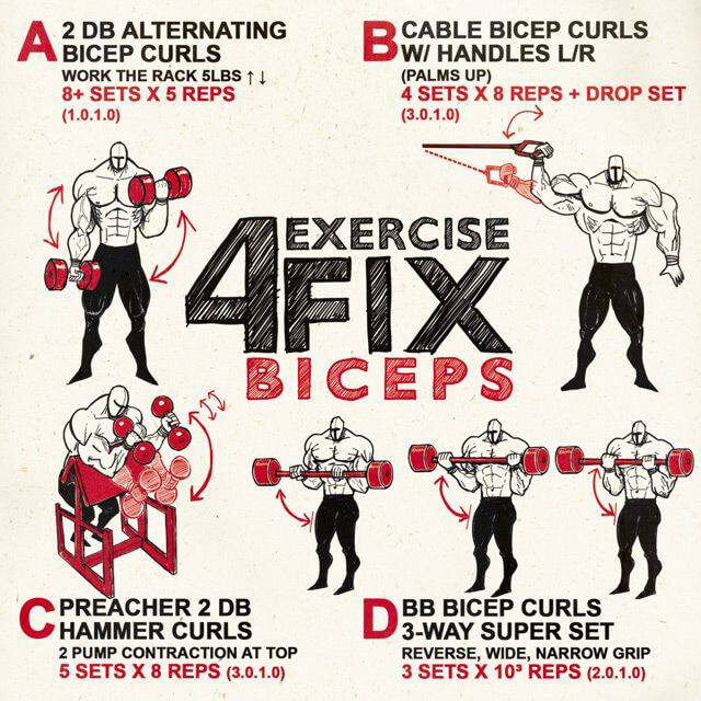 4 Exercise Fix Biceps! Healthy Fitness Arm Training Bicep Work