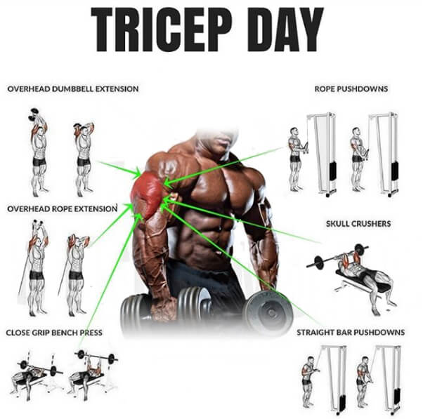Tricep Day - Healthy Fitness Arm Workout Plan