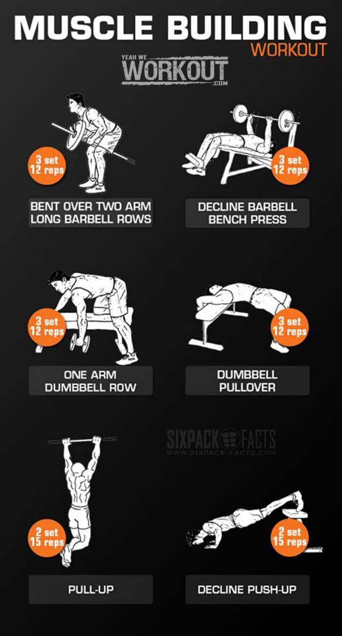 Muscle Building Workout Back Chest Arms Full Body Routine