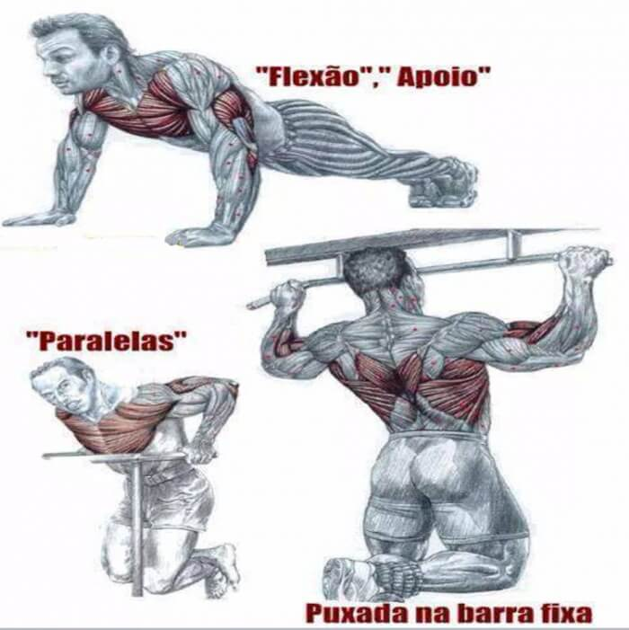 Chest Back Training Health Fitness Noexcuses Workout Arms Ab